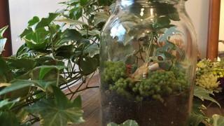 カエルを飾るカエルウム