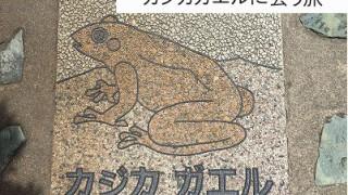 モリアオガエルとカジカガエルに会いにいく旅