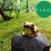 苔とカエルの魅力を伝える