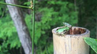 ラブなフロッグ!可愛いカエルの写真のまとめ